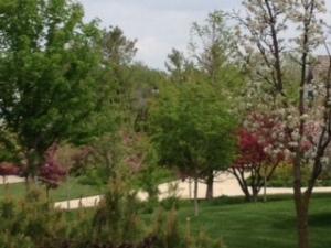 blog green trees