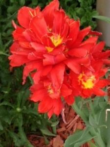 blog red flowers